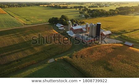 Stock fotó: Amerikai · mezőgazdaság · gazdálkodás · USA · zászló · Amerika