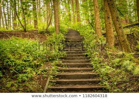 Lépcsősor erdő fű zöld híd tábla Stock fotó © Marfot