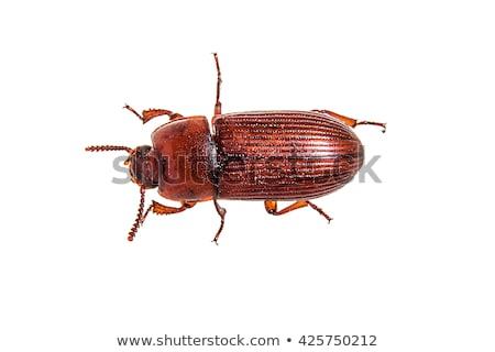 beetle red Stock photo © jarp17