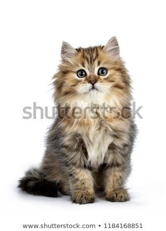 Сток-фото: коричневый · сидят · котенка · Cartoon · иллюстрация