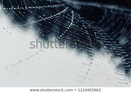 pókháló · közelkép · harmat · cseppek · tavasz · terv - stock fotó © sirylok