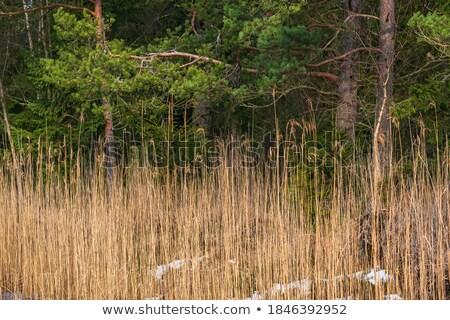 自然 · 光 · 竹 · 工場 · 反射 · ライブ - ストックフォト © ustofre9