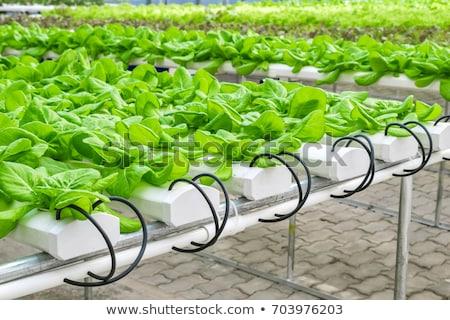 vruchtbaarheid · wetenschap · geneeskunde · symbool · medische · onderzoek - stockfoto © lightsource