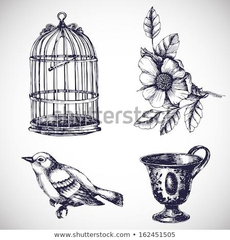 Vintage birdcage Stock photo © ElaK