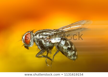 house fly portrait stock photo © suljo