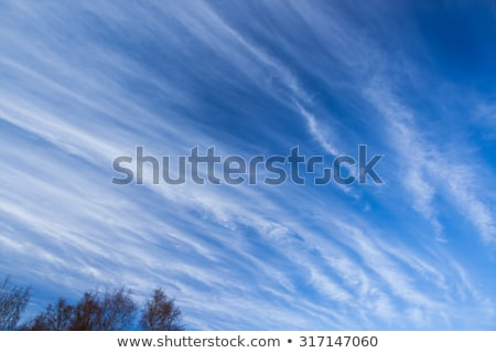 Long cirrus clouds skyscape Stock photo © Juhku