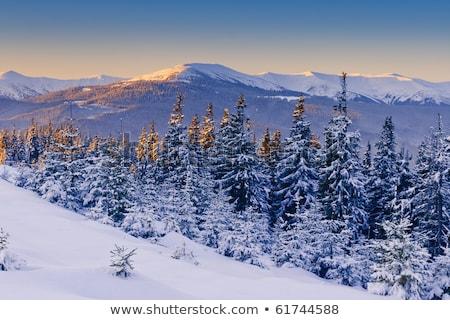 Mroźny rano góry zimą krajobraz śniegu Zdjęcia stock © Kotenko