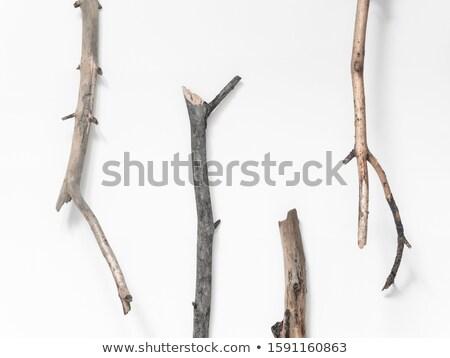 枯れ木 四肢 青空 木材 雲 植物 ストックフォト © njnightsky
