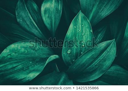 Yaprak rainforest damla su yeşil yaprak yağmur Stok fotoğraf © meinzahn