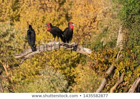 Három déli föld fa park Dél-Afrika Stock fotó © simoneeman