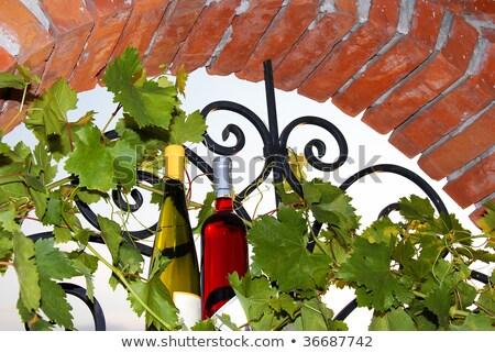 wine bottles between vine leaves on brick window stock photo © simply