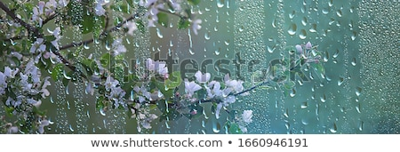 Abstract macro with rain drops on a flower blossom Stock photo © manfredxy