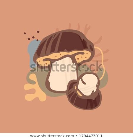 porcini icon on brown square Stock photo © glorcza