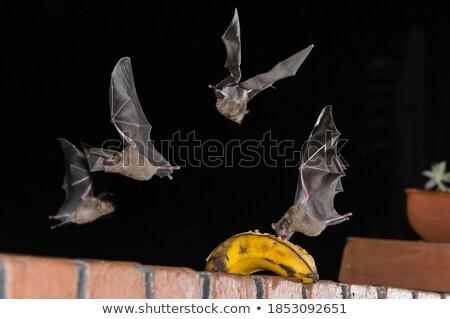Enyém repülés ház fiú horgászbot áll Stock fotó © psychoshadow
