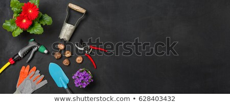 bloemen · tuin · tools · hemel · bloem · gras - stockfoto © zerbor