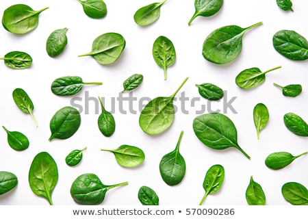 Raw Spinach Leafs Stock photo © zhekos