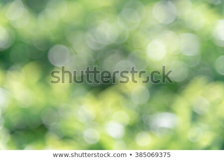 Grüntee hellen farbenreich lebendig Blume Medizin Stock foto © JanPietruszka