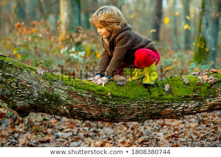 Сток-фото: мальчика · дерево · древесины · лес · ребенка · молодежи