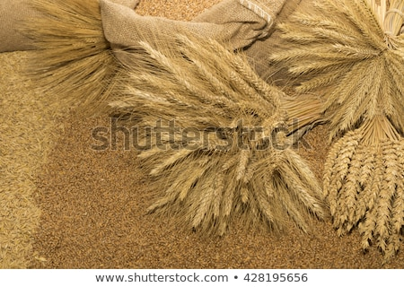 Stock photo: Sacks with wheat harvest and yellow hweat at background.