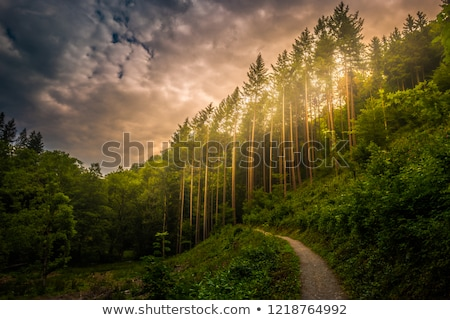 Stock photo: Hiking path and sunset in beadutiful woods