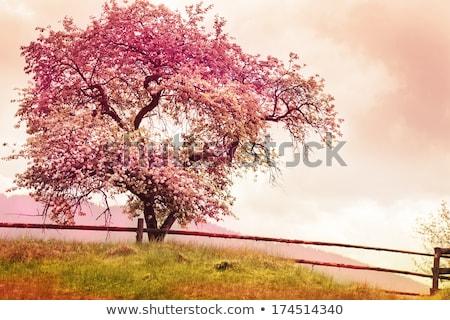 Fiore albero natura segno primavera tempo Foto d'archivio © manaemedia