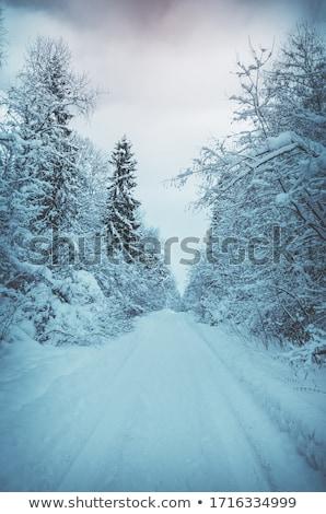 Inverno paisagem montanha floresta neve estrada Foto stock © Kotenko