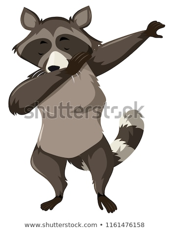 A raccoon dap on white background Stock photo © bluering