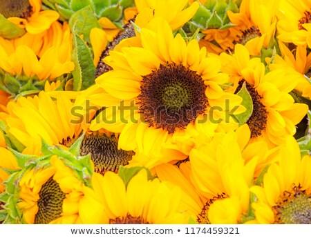 フィールド 黄色 花壇 庭園 花 夏 ストックフォト © manfredxy