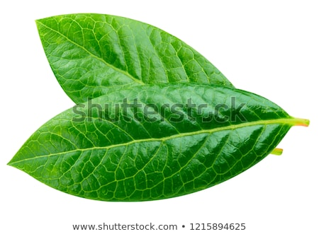 Fresh raw organic blueberries with leaf on white background. Macro close up Stock photo © DenisMArt