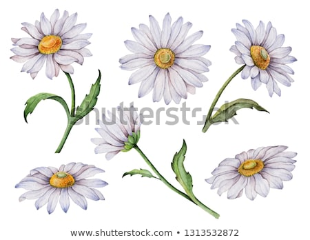 watercolor hand paint flowers and leaves made by hand isolated on white background use for card m stock photo © kollibri