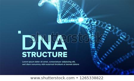 DNA鑑定を · 構造 · ベクトル · 抽象的な · 未来的な - ストックフォト © pikepicture