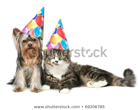 party dogs and cats with birthday hats on white background Stock photo © feedough