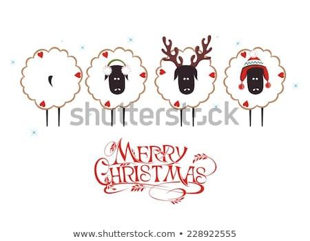 Noel koyun yalıtılmış beyaz arka plan Stok fotoğraf © hittoon
