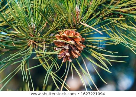 Ikon daire düğme ağaç ahşap orman Stok fotoğraf © smoki