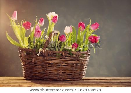 virágágy · lila · rózsaszín · tulipánok · virágok · zöld · fű - stock fotó © vapi