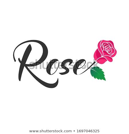 Merge rose stock photo © jomphong
