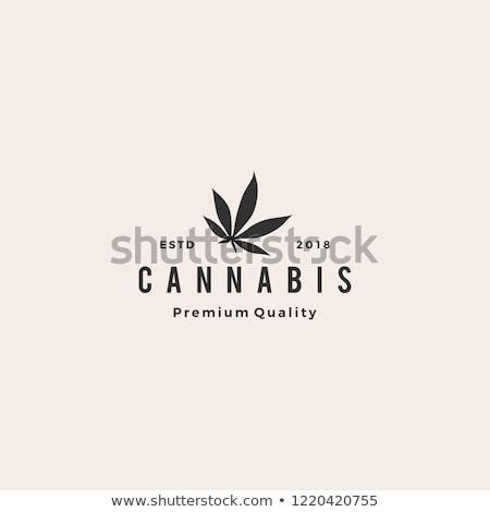 Cannabis levél logo levél marihuána logoterv Stock fotó © -TAlex-