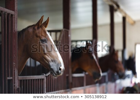 Wooden stable by horses Stock photo © ElenaBatkova