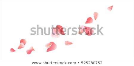 Heart with sakura flowers Stock photo © blackmoon979