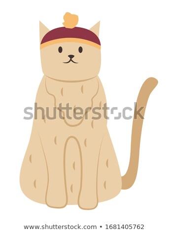 кошки смешные Hat сидят изолированный ПЭТ Сток-фото © robuart