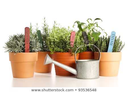 variety of potted herbs rosemary, lavender and watering can Stock photo © galitskaya