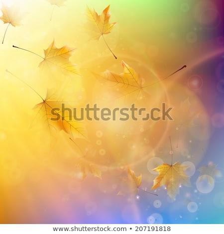 ベクトル 紅葉 明るい 晴れた 空 木材 ストックフォト © Alkestida