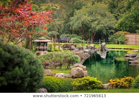 Японский · клен · дерево · саду · природы · лист - Сток-фото © fazon1