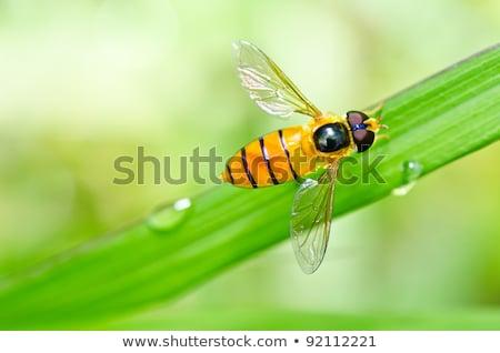 フルーツ · ファイル · 花 · 緑 · 自然 · 庭園 - ストックフォト © sweetcrisis