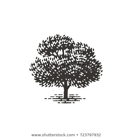 Stock photo: Apple tree woodcut