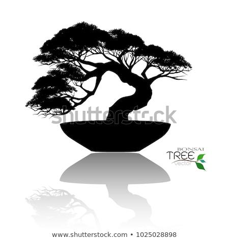 бонсай дерево иллюстрация банка белый лист Сток-фото © vectomart