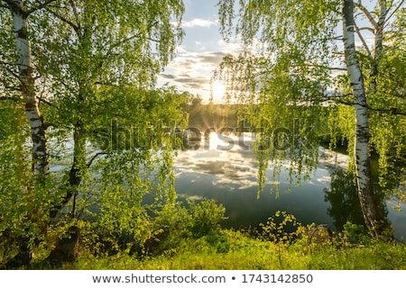 Birch forest. May Stock photo © Nobilior
