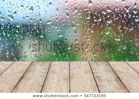 moist fall floor stock photo © ca2hill