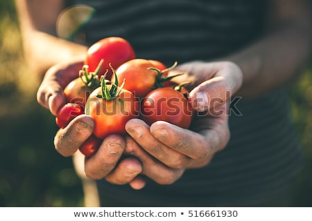 Fresh tomatoes in hand  Stock photo © Photocrea