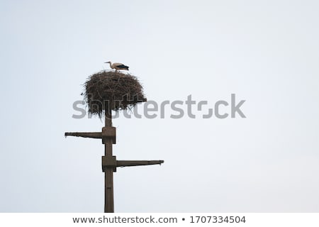stork standing on wooden pole stock photo © compuinfoto